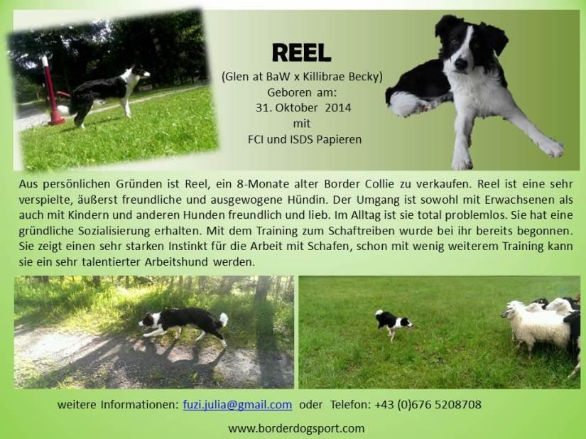 Reel_flyer_Dall